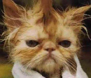 My Cranky Sinuses!
