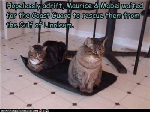 hopelessly-adrift-maurice-mabel-waited-for-the-coast-guard-5272458