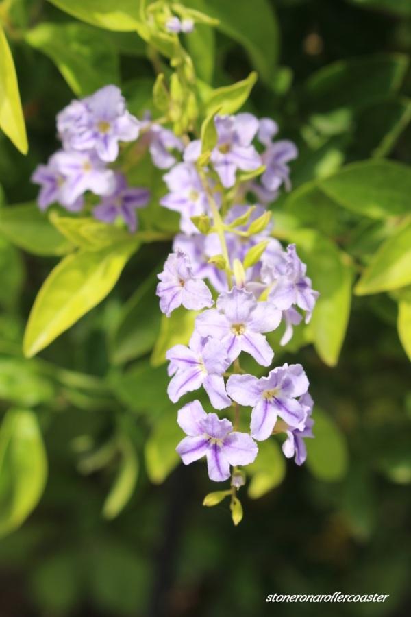 Flora in Focus