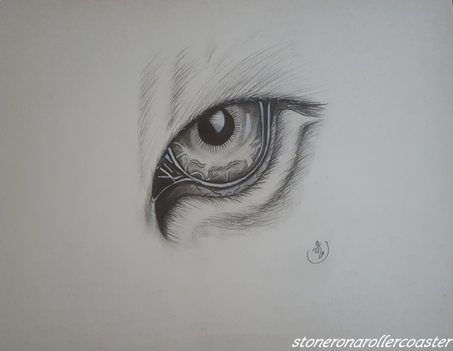 Tiger's Eye- Graphite Drawing