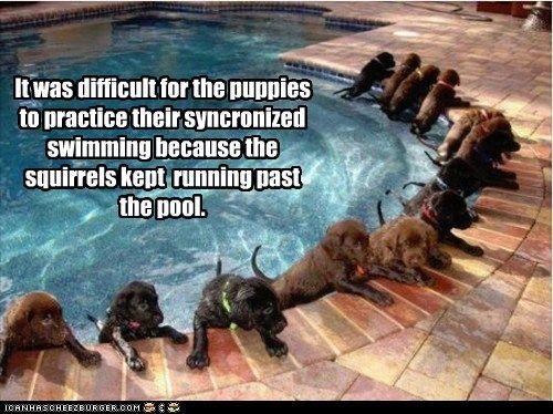 84ca1667e01bea2429d15b22fac3f4d6--so-funny-funny-dogs