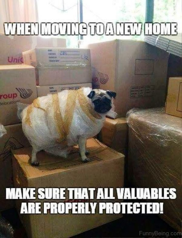 pug-memes-when-moving-to-a-new-home