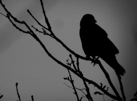 The Crow and The Window – #writephoto