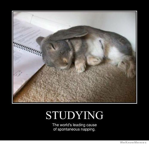 Study?? really?? zzzZZZ