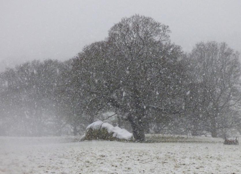 Snow globe in my mind –#writephoto