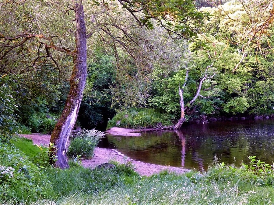 My tranquility, my light #writephoto