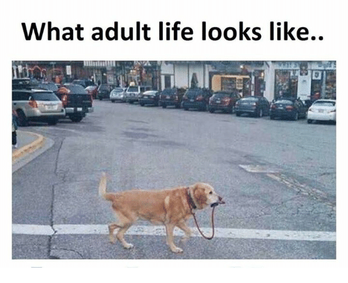 Just adult life thing I guess..